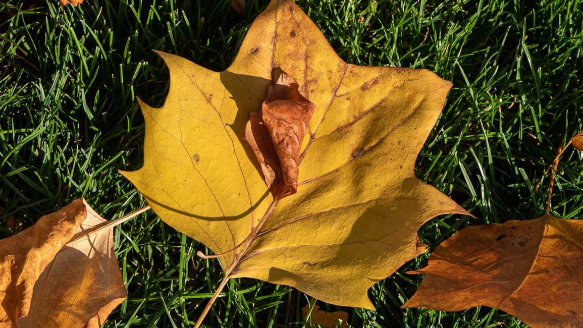 Herbstgelb