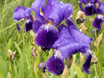 Blütenzauber_-114