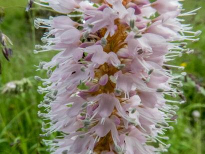 Blütenzauber_-117