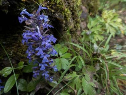 Blütenzauber_-118