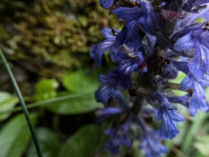 Blütenzauber_-119