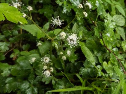 Blütenzauber_-121