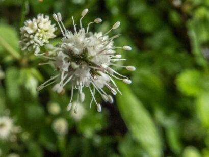 Blütenzauber_-122