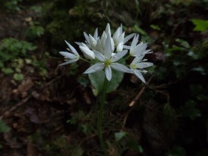 Blütenzauber_-123
