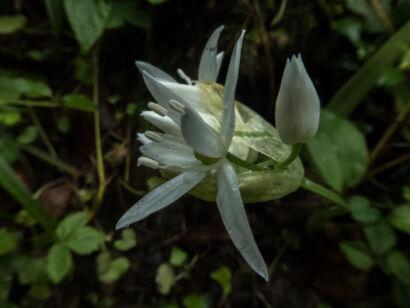 Blütenzauber_-124