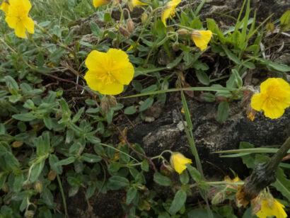 Blütenzauber_-128