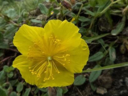 Blütenzauber_-129