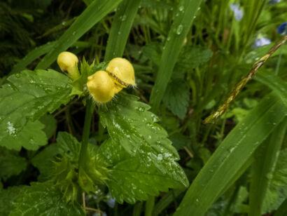 Blütenzauber_-130