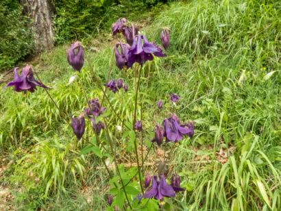 Blütenzauber_-132