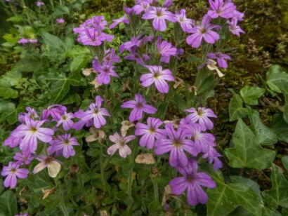 Blütenzauber_-138