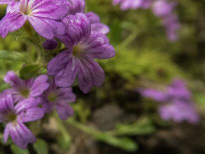 Blütenzauber_-139