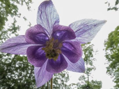 Blütenzauber_-141