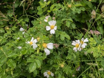 Blütenzauber_-145