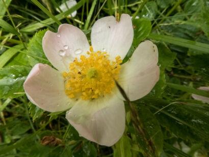 Blütenzauber_-146