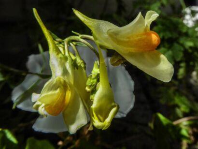 Blumen_gelb-1022
