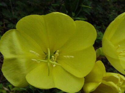 Blumen_gelb-1023
