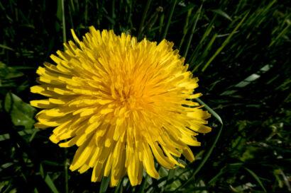 gelbe Tupfer