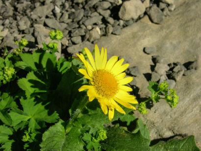 wpid949-BlumenGelb-37-von-37