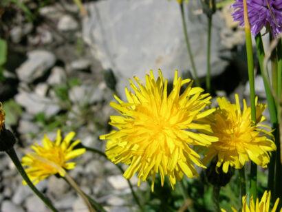wpid951-BlumenGelb-38-von-37