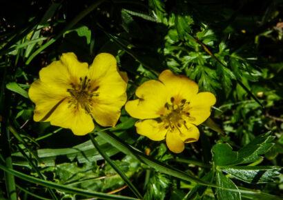 wpid961-BlumenGelb-43-von-37