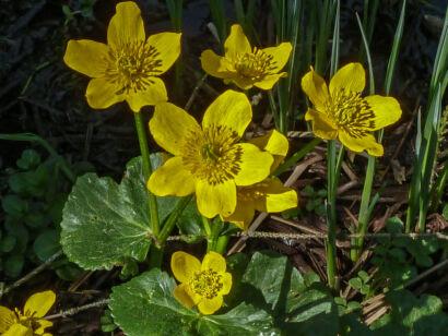 wpid963-BlumenGelb-44-von-37