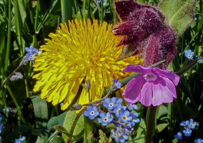 wpid965-BlumenGelb-45-von-37