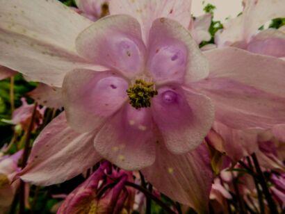 Blumen_lila-2001