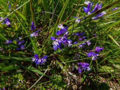 Blumen_lila-300