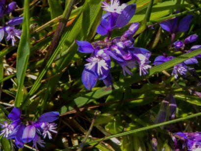 Blumen_lila-301
