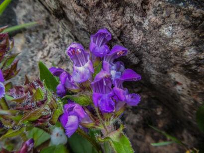 wpid1267-Blumen-lila-51-von-72