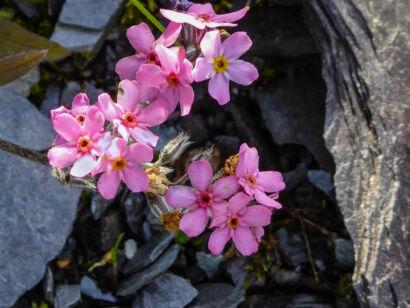 wpid1273-Blumen-lila-54-von-72