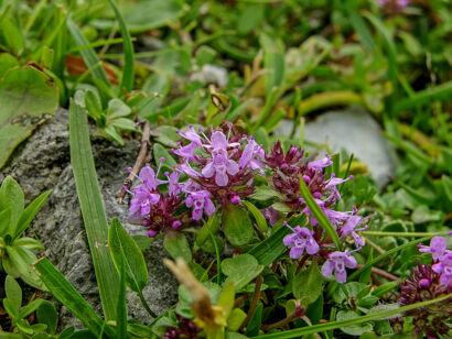 wpid1279-Blumen-lila-57-von-72