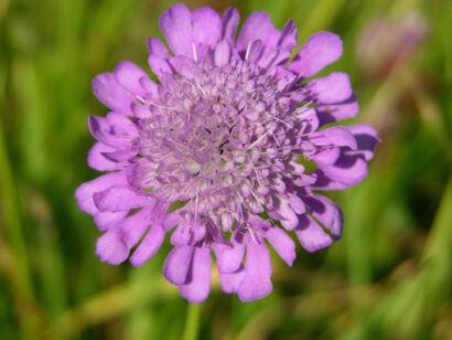 wpid1307-Blumen-lila-71-von-72