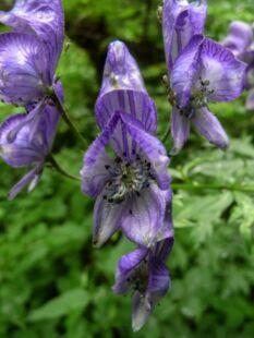 wpid1319-Blumen-lila-77-von-72