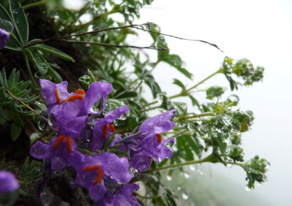 wpid1321-Blumen-lila-78-von-72