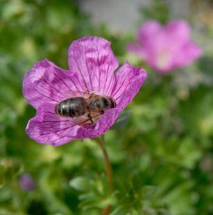 wpid1327-Blumen-lila-81-von-72