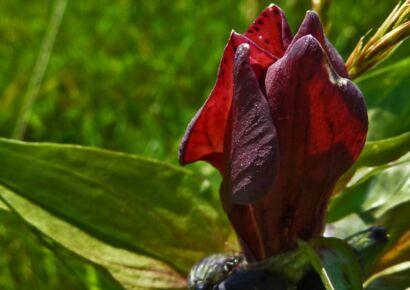 wpid2435-rote_Blumen-11