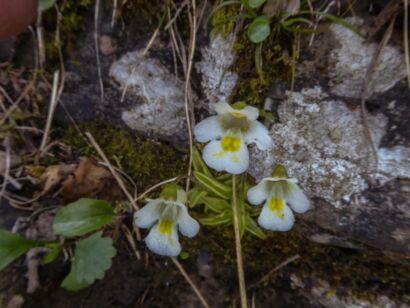 Blumen_weiss-300