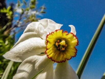 Blumen_weiss-306