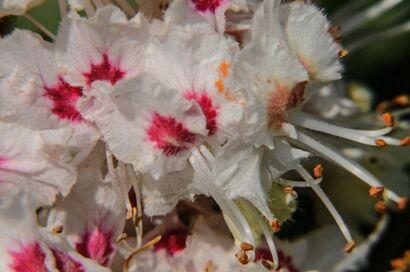Blumen_weiss-405