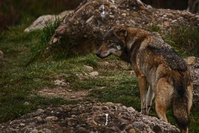 063 Tierpark 069