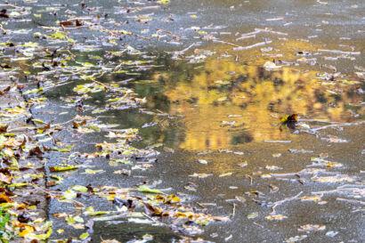003 Herbstregen-106