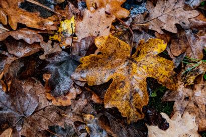 006 Herbstregen-125