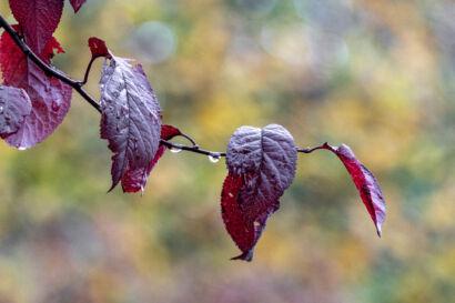 008 Herbstregen-115