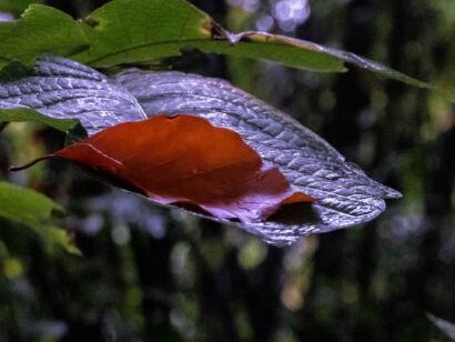 009 Herbstregen-140-Bearbeitet