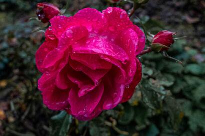 014 Herbstregen-173