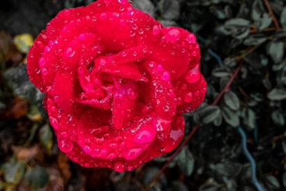 015 Herbstregen-179