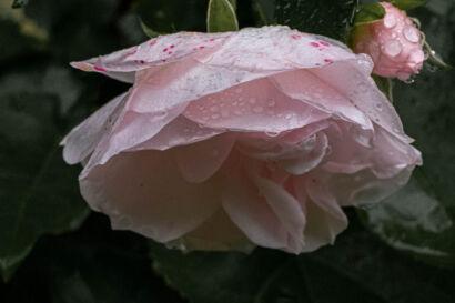 016 Herbstregen-202