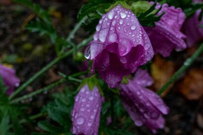 017 Herbstregen-181