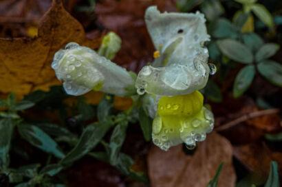 018 Herbstregen-185